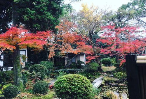 季節の庭 宮の内茶寮